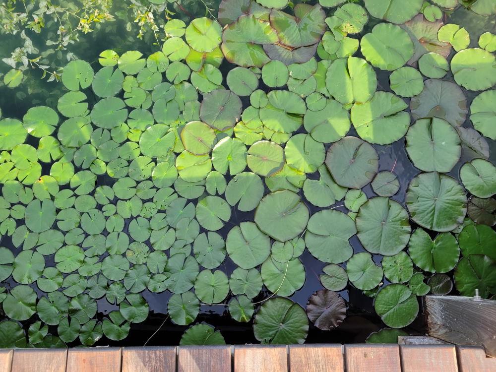 Aschauerweiher Naturschwimmbad