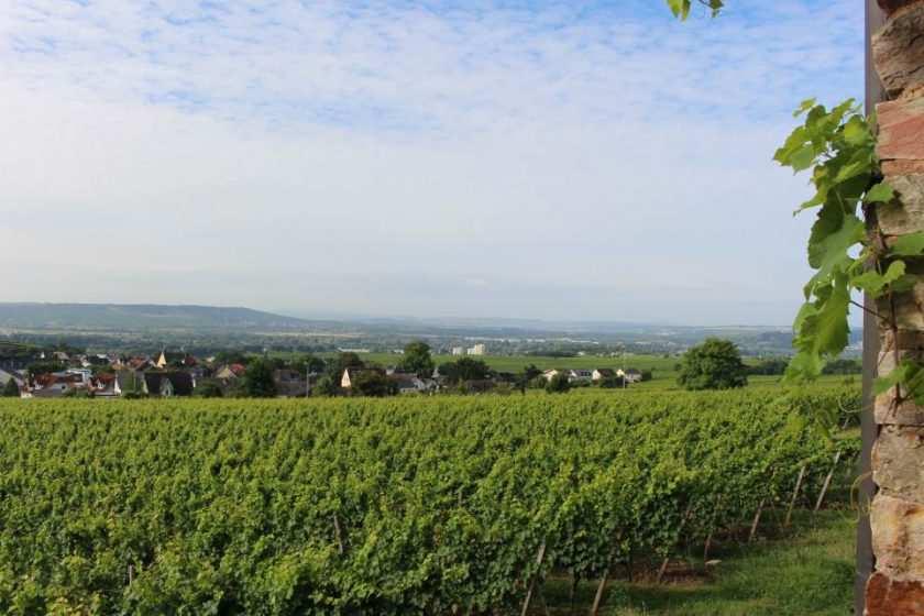Blick über Weinberge im Rheingau