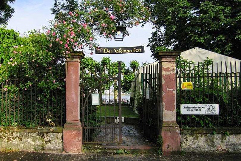 Der Weingarten Walluf