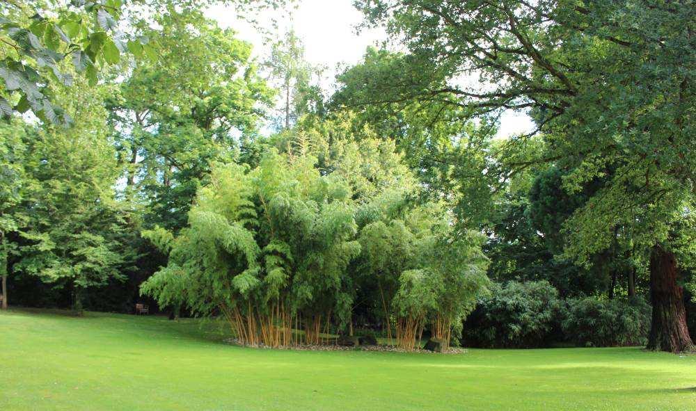 Grün im Park