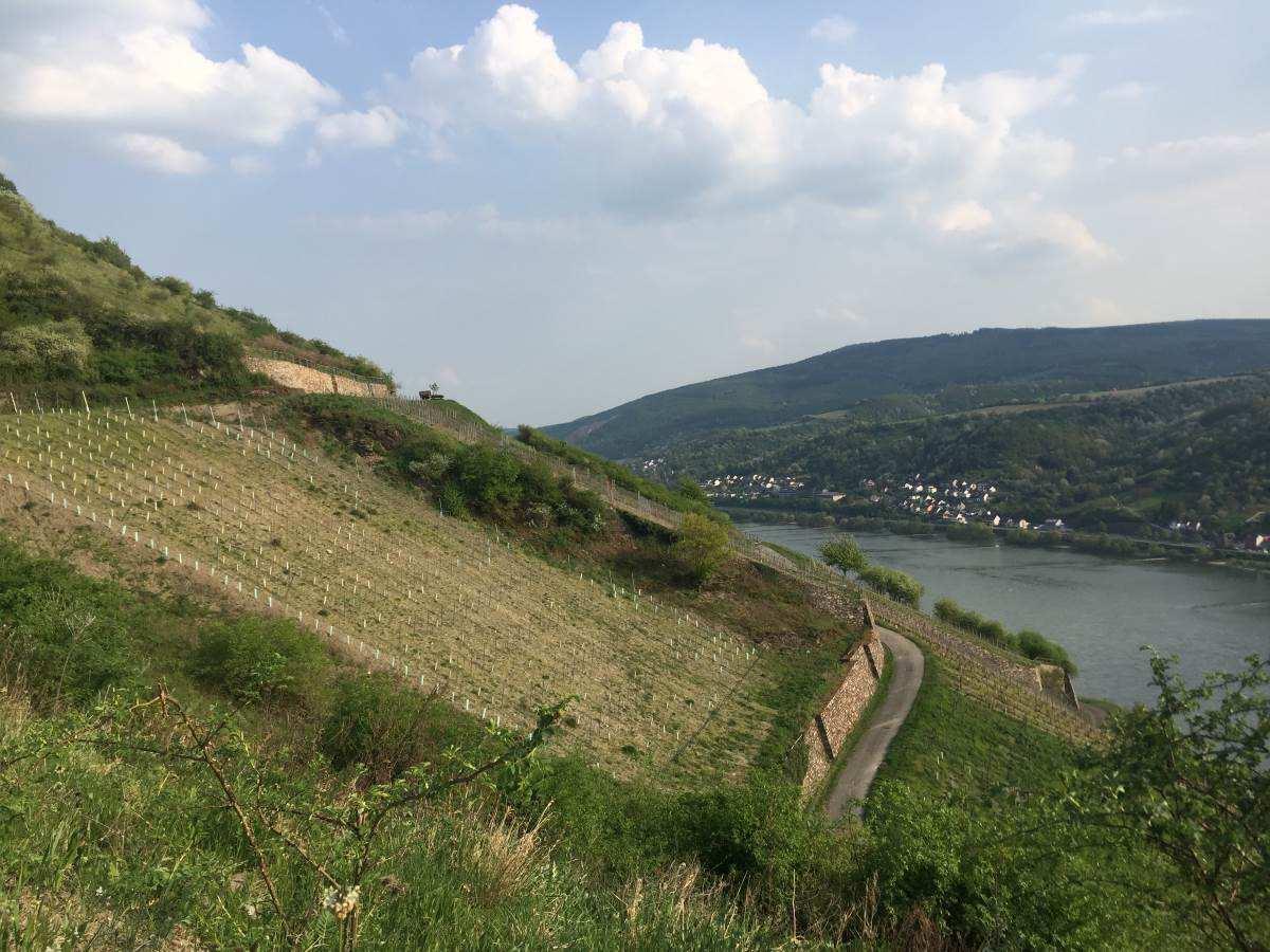 Wandern Rheinsteig