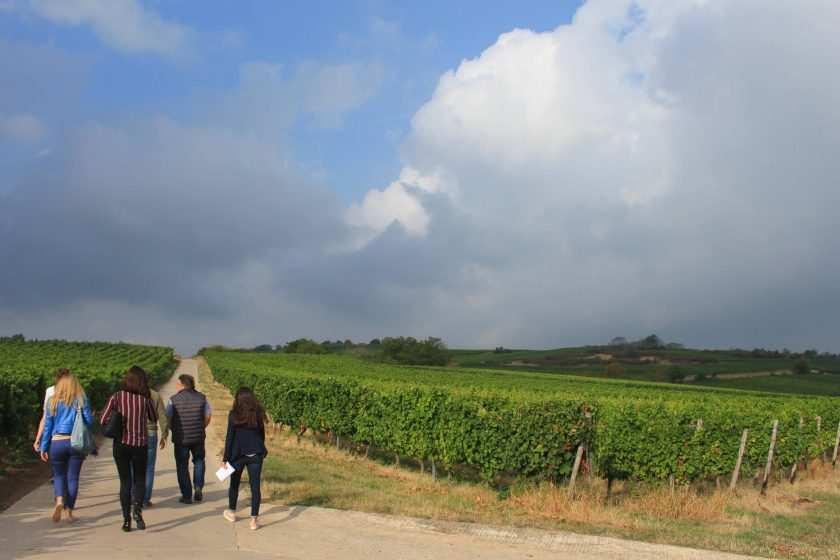 Weinwanderung Rheinhessen mit Führung des Winzers